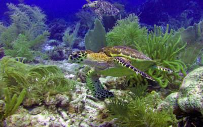 Curacao-duiken-fred.jpg