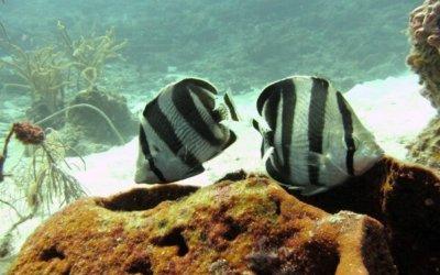 Duiken op curacao tugboat diving