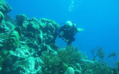 Opfrisduik duiken op curacao