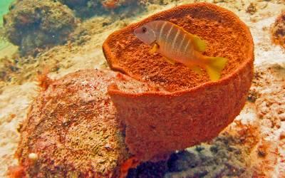 curacao duikschool