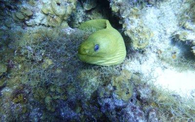 duiken curacao 10