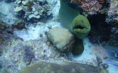 duiken curacao 8