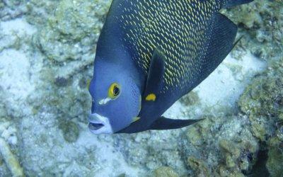duikenopcuracao