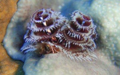 duikenopcuracao10