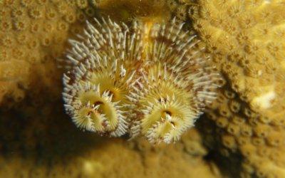 duikenopcuracao2