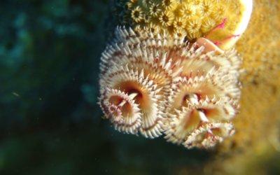 duikenopcuracao3