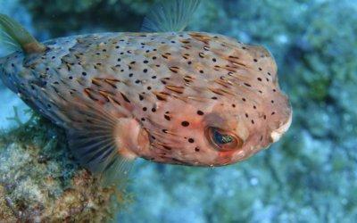 duikenopcuracao6