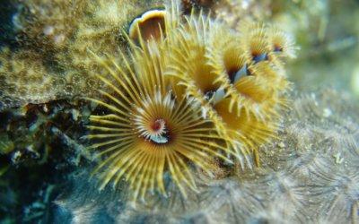 duikenopcuracao8