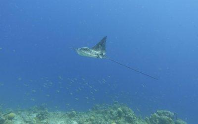 duikenopcuracao9