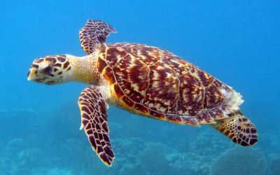 duikschool curacao