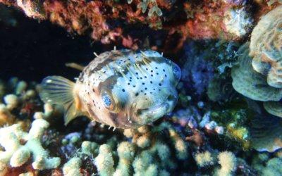 duikschool curacao 15