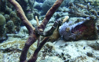 duikschool curacao 4