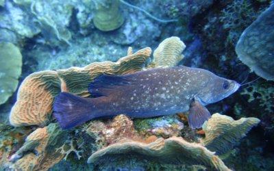 duikschool op curacao 1