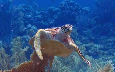 schildpad curacao