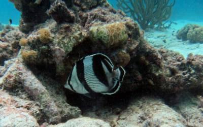 vis Duiken op curacao